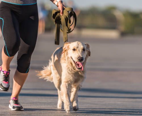 Dog fitness for more well-being in dogs