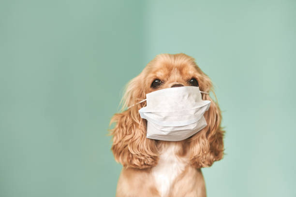 Dogs and Coronavirus – Everything you need to know