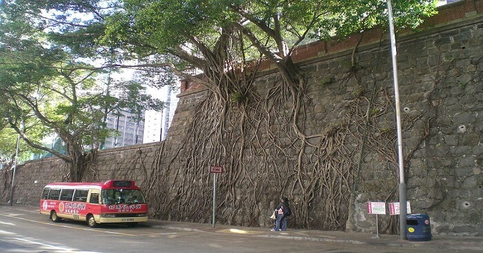 Forbes Tree Wall